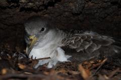 DSD1157Sturmvogel_klein