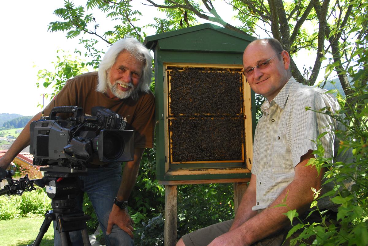 schwänzeltanz der honigbiene übung